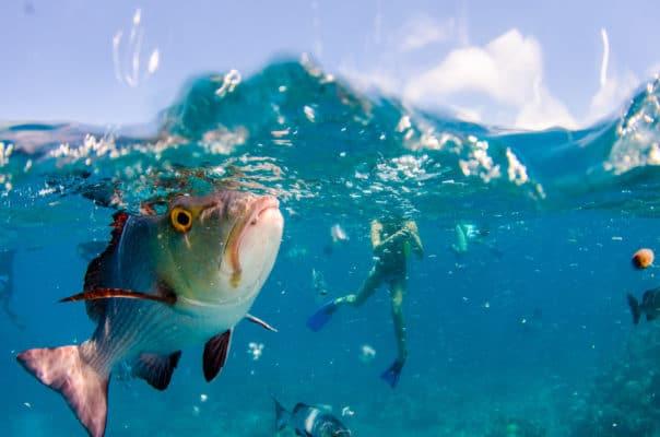 Dykker svømmer rundt mellem fisk