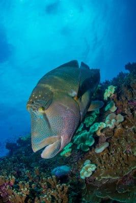 Mystisk fisk i koralrev