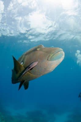 Mystisk fisk under vandet