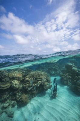 Dykker under havet i koralrev og himmel med skyer ovenover