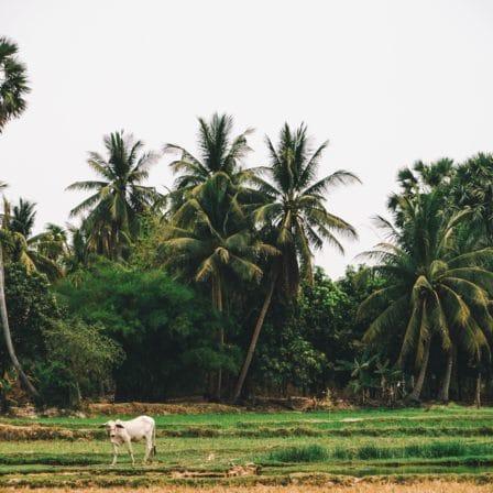 Dyr går på mark med palmer