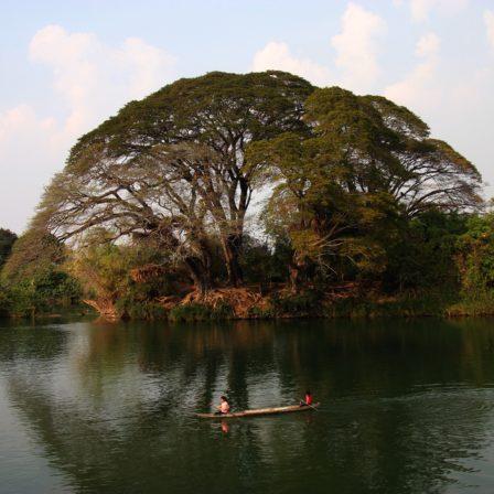 Stort træ ved flod