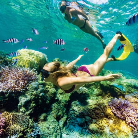 Dykker i koralrev med fisk