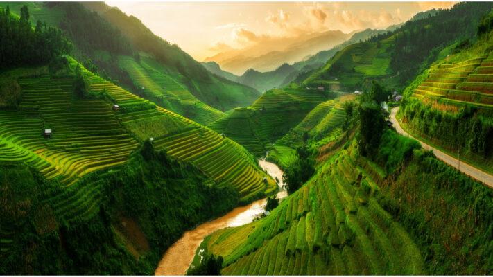 Dal med rismarker i Vietnam
