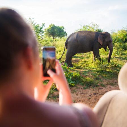 Udawalawe - Elefanter